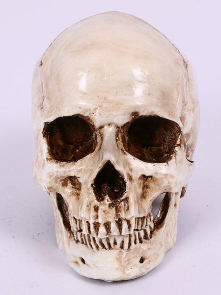 Halloween Skull Simulation Human Skull фото
