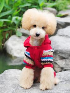 Sweater d'hiver pour chien, coton à peluches adorable