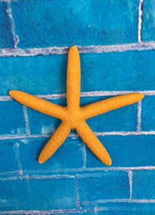 orange-beach-wedding-decors-resin-starfish