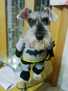 batman-dog-costume-deep-gray-holloween-pet-clothing